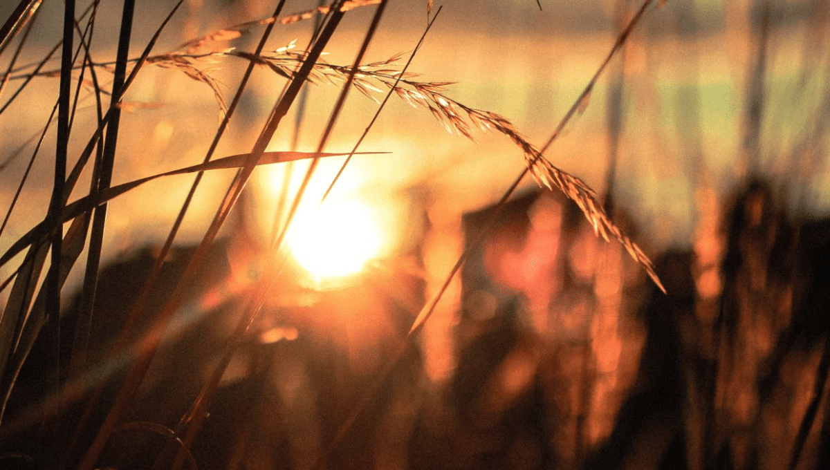 Counselling and Therapy - Sunset through a wheat field