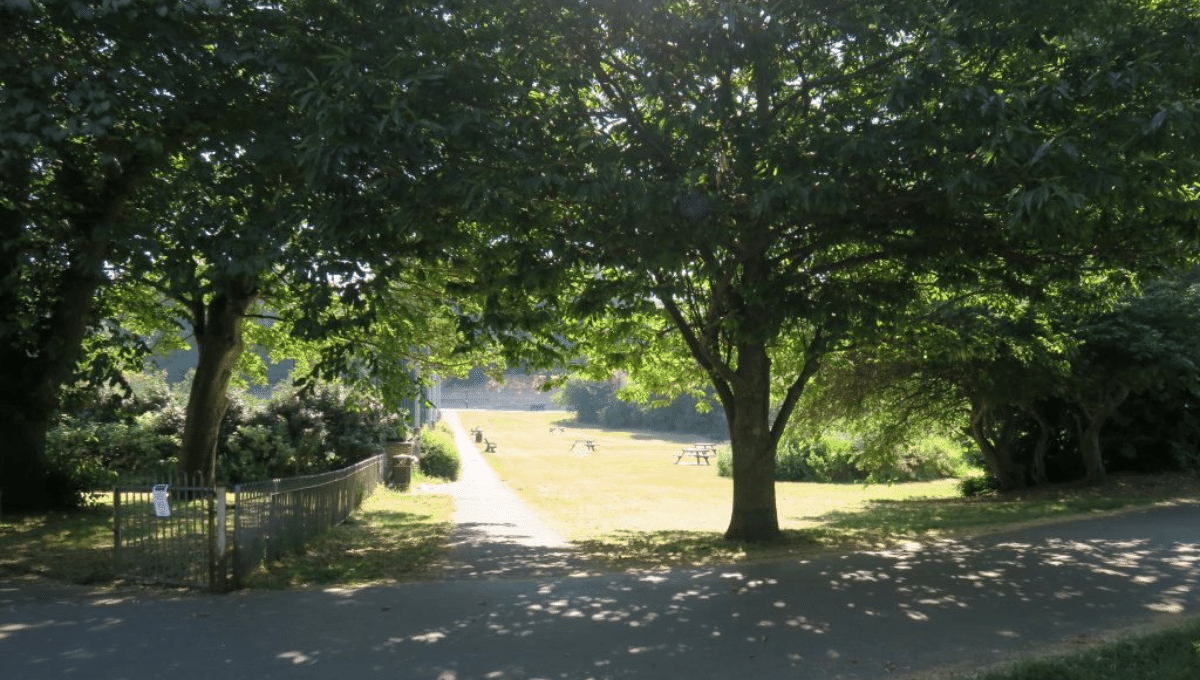 Walk and talk Therapy Image - image of a path through a park